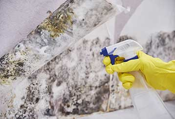How To Deal With Mold | Drywall Repair & Remodeling Moorpark, CA